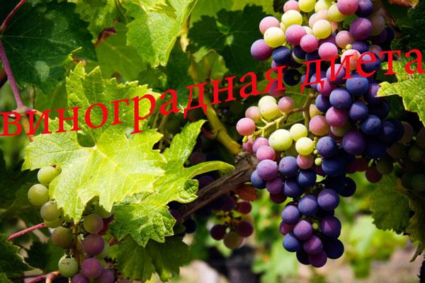 vinogradnaya-dieta-foto-2